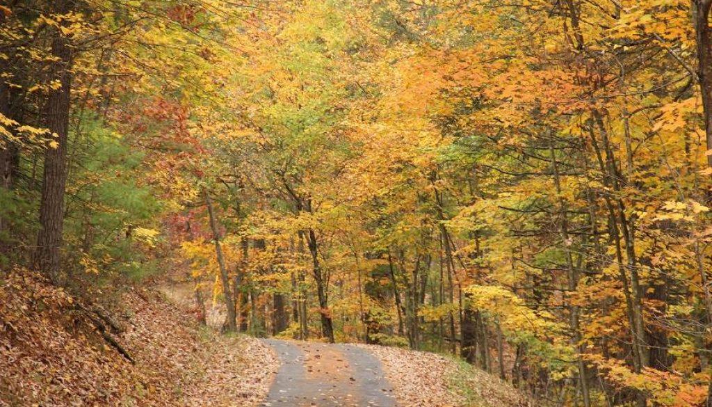 Autum Woods 70