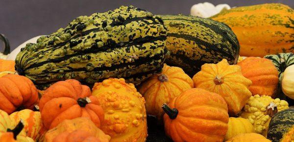 pumpkins-1650642_1280