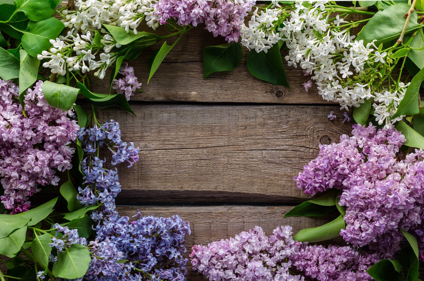 spring background-1914126_1920